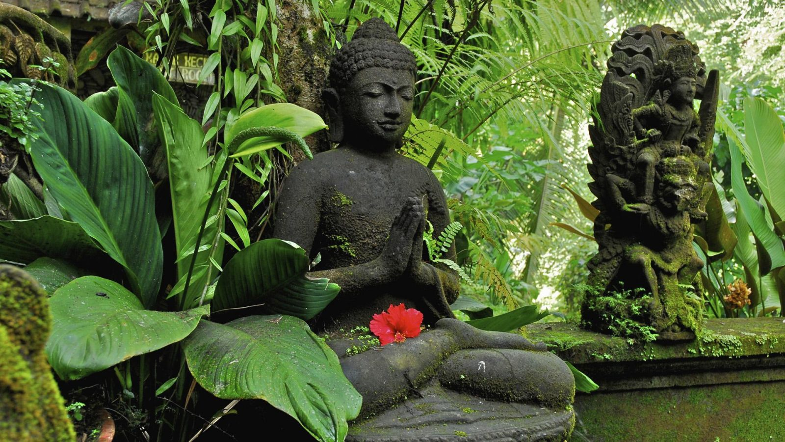 buddha wallpaper drwallpapercom